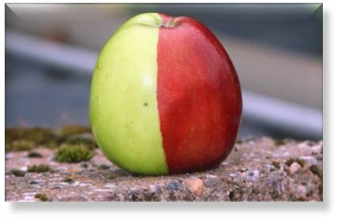 Content Marketing and Inbound Marketing are Two Halves of the Same Apple