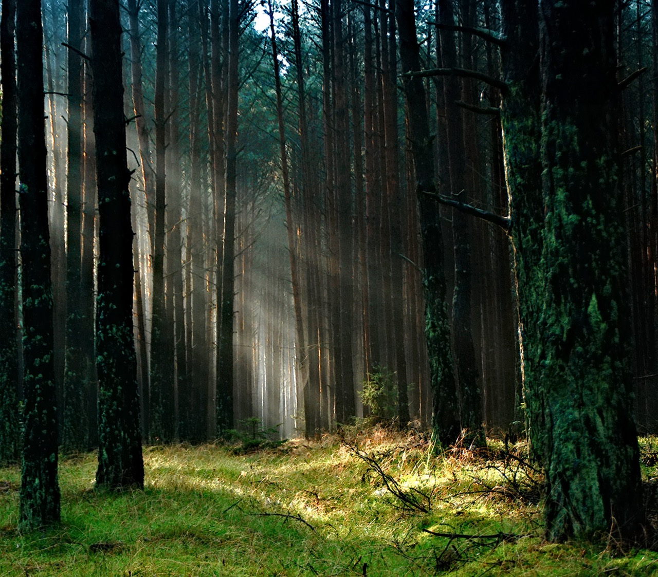 forest-the-sun-morning-tucholskie-158251.jpeg